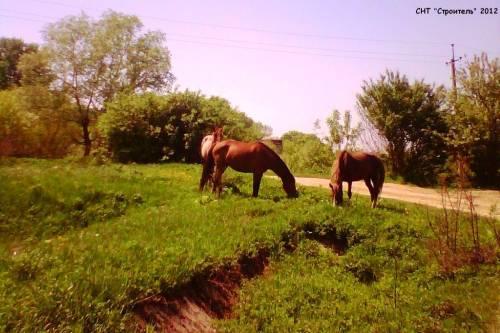 СНТ строитель энем адыгея рядом краснодар окрестности садовое товарищество cyn